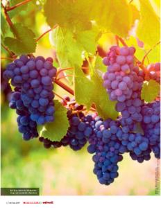 Weinjournal Nr. 67 Mit dem Pinot Noir rund um den Globus